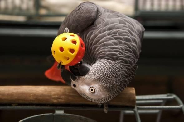 آموزش بازی با طوطی